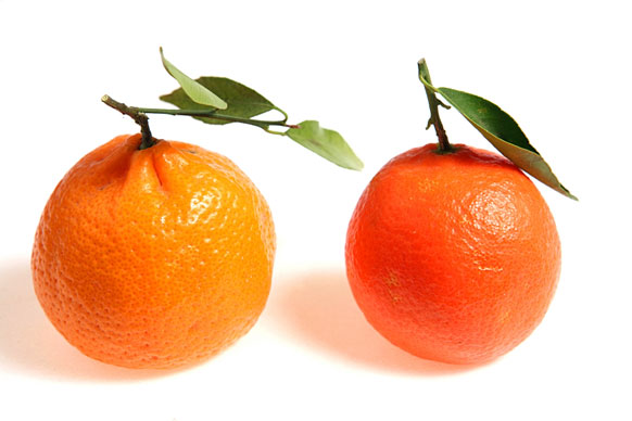 two oranges with stems and green leaves